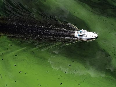 A boat sails through a deepening algae bloom across the Caloosahatchee River